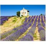 MISDA Obraz na plátně – levandulové pole